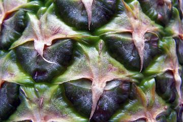 Skóra ananasa
