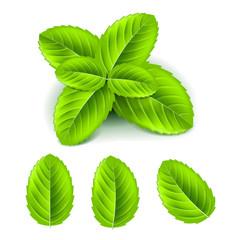 Mint leaves 3d photo realistic vector set
