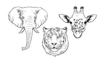 Set of black and white hand drawn wild animals. Illustration of elephant, tiger and giraffe
