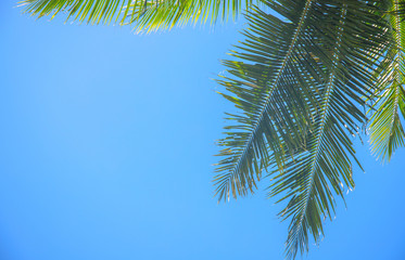 Palm branch and blue sky. Green tropical leaf on blue background.