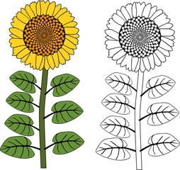 Coloring page. Sunflower plant with yellow flower and leaves