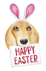 Happy Easter Doggy wearing Bunny Ears and holding Holiday Greeting. Hand drawn water color graphic painting on white background, cutout. Print, poster, decoration, web banner. Playful and sweet.