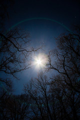Der Vollmond in einer klaren Winternacht durch Bäume aufgenommen