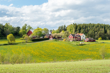 Spring in the countryside of Småland in Sweden Wall mural