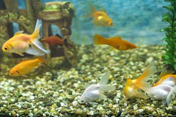 Lots of beautiful aquarium fish for home