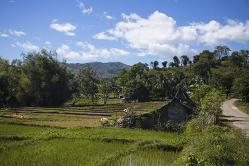 Tropical rural landscape with simple rustic hut. Mountain landscape with terrace rice fields.