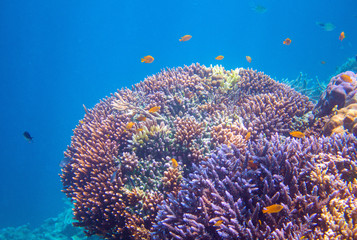 Yellow tropical fish in coral. Tropical seashore animals underwater photo.