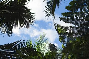 Palm tree leaf on blue sky background. Coco palm tree top silhouette on sky.