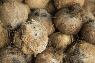 Whole coconuts in pile closeup photo. Exotic fruit or nut. Brown hairy coconuts for sale