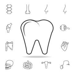 Premium tooth icon or logo in line style. Detailed set of human body part icons. Premium quality graphic design. One of the collection icons for websites, web design, mobile app