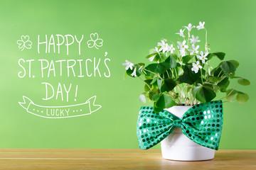 Saint Patricks Day shamrock in white pot with bowtie