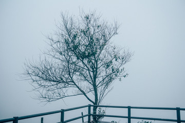 Alone Tree silhouette in foggy morning, vintage style..Mysterious foggy winter scene with leafless tree in fog