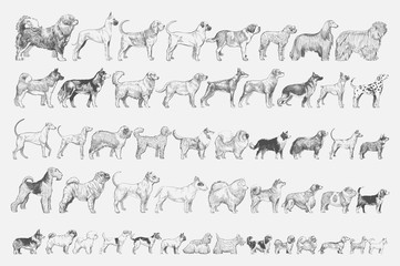 Illustration drawing style of dog Wall mural