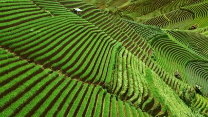 Beautiful rice terraced fields landscape view in Indonesia