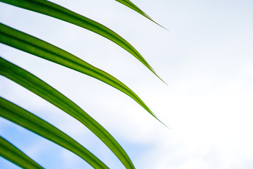 Green palm leaves photographed from a close distance in the background of the blue sky. Top view with copy space to do great summer postcard or presentation