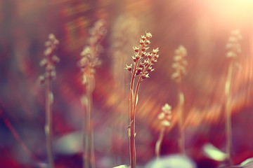 vintage background little flowers, nature beautiful, toning design spring nature, sun plants