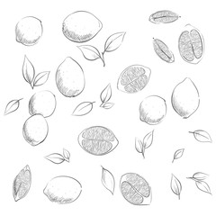 ripe lemon illustration