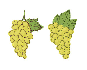 Bunch of green grapes. Set of vector illustration. Healthy food.