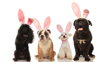 four adorable dogs wearing easter bunny ears