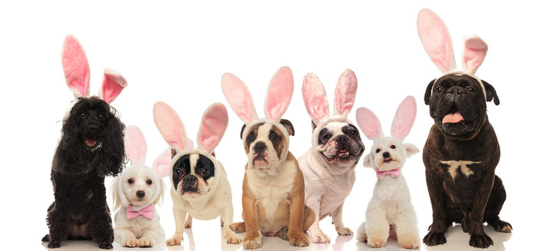 group of cute dogs wearing easter bunny ears