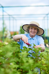 Portrait of happy senior woman working in glasshouse cutting  bush and looking at camera