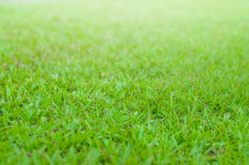Close up green grass field with blur park background,Spring and summer concept