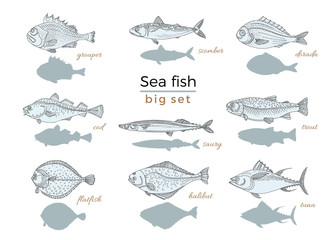 Set of sea fish. Seafood. Vector sketch