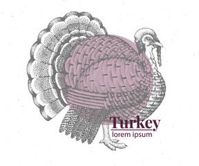Vector hand drawn turkey illustration. Retro engraving style. Sketch farm animal drawing. Logo template.