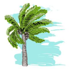 Palm tree sketch on blue background.