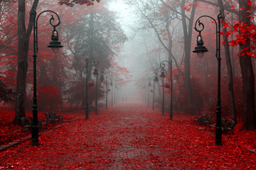 Deurstickers Rood paars Beautiful autumn in red colors