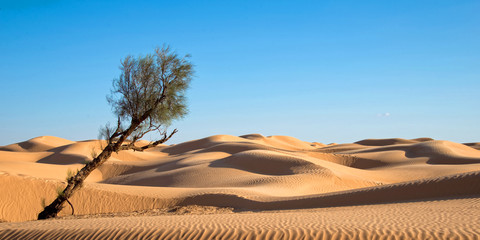 Sand dunes in the desert of Sahara, South Tunisia