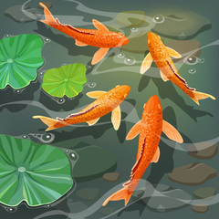 Poster carps Koi fish under water. Vector illustration.