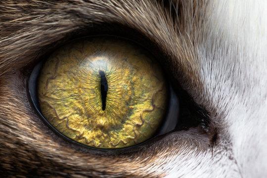 Closeup of cat eye