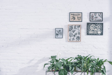 Tattoo designs in frames in modern studio