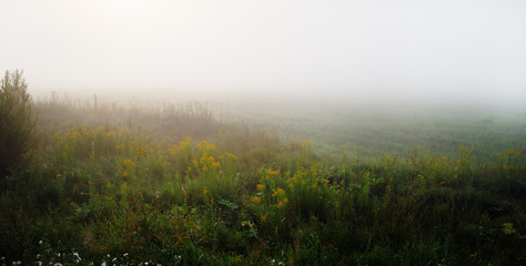 Meadow in the dense morning fog. Rural landscape. Panorama shot.