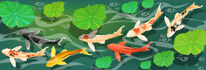 Carps Koi fish under water. Vector illustration.
