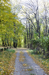 autumn forest, all the foliage is painted with golden color in the middle of the forest road