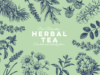 Beautiful vector hand drawn tea herbs Illustration.