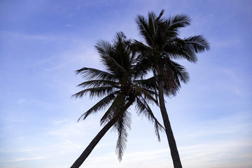 silhouette of coconut palms on the beach at sunset