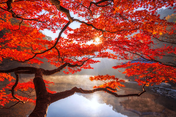 Photo sur Aluminium Rouge traffic Autumn Maple red in Naejangsan national park, South korea