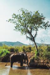 Big elephant standing in water