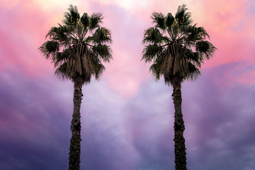two palm trees on the background of fantastically beautiful sky