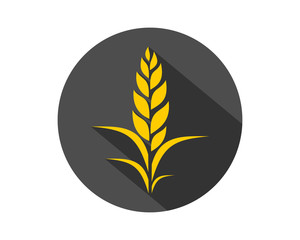 paddy wheat barley black circle plant harvest agriculture image vector