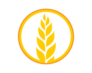 circle yellow paddy wheat barley plant harvest agriculture image vector