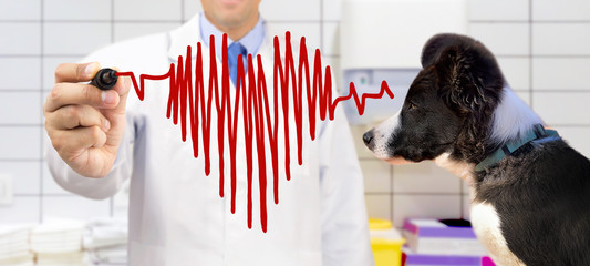 Veterinarian standing and drawing chart heartbeat