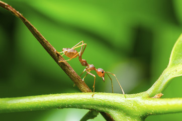 Ants with blurred images