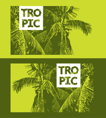 Green leaves silhouettes of coconut palm tree.
