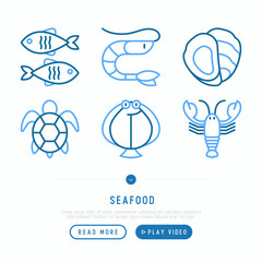 Seafood thin line icons set: lobster, fish, shrimp, octopus, oyster, turtle. Modern vector illustration for restaurant menu.