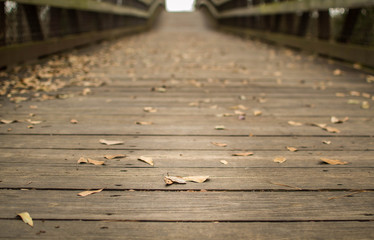 Fallen leaves on bridge