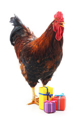 Red cock and gifts.